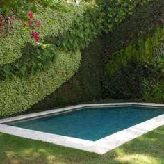 Fotos de Piscinas para Inspirar - Piscina com muro e jardim vertical
