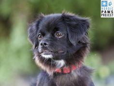 Chiens disponibles pour Adoption   Animatch Dog Adoption