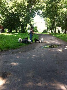 Выгул собачек)