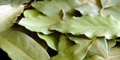 Bobkový list Detox, Plant Leaves, Food And Drink, Nature, Plants, Fresh, Fitness, Syrup, Lavender