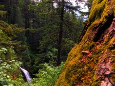 Hamilton Mountain and Rodney Falls Trail is a 6.9 mile moderately trafficked loop trail located near Stevenson, Washington that features a waterfall and is rated as moderate. The trail is primarily used for hiking, walking, nature trips, and birding and is accessible year-round.