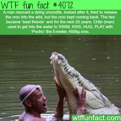 The most amazing story about a man a crocodile - WTF fun facts