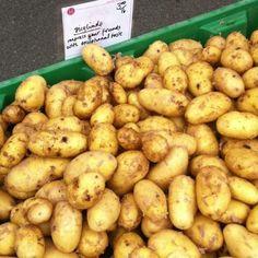 Αρχείο:Ποικιλία πατάτας Sieglinde.jpeg