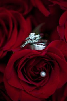 ring shot idea (red roses) - Red, White & Black Wedding from Rebekah Hoyt Photography - via heartloveweddings
