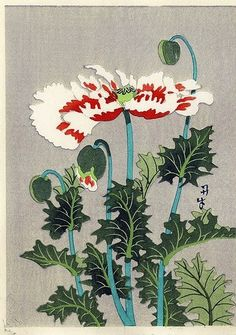 periwinkleliving: (via Fuji Arts Japanese Prints - Poppies by century artist (not read)) Botanical Drawings, Botanical Illustration, Botanical Prints, Art Floral, Japanese Woodcut, Japanese Flowers, Japanese Painting, Chinese Painting, Japanese Prints