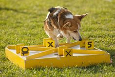 Train Your Dog in Nose Work, a New Canine Sport | Dogster
