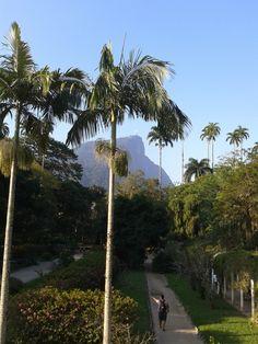 Jardim Botânico, Rio de Janeiro. Agosto de 2013