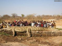 Not a biggie, just a 22 foot, 2500 pounds crocodile - MemePix