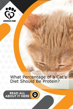 This is the best kombination of nutrition in cat food - Get more information at AnimalsA2Z.com. Canned Cat Food, Dry Cat Food, Low Protein Foods, Zero Carb Diet, Radioactive Iodine, Thyroid Levels, Kidney Disease Stages, Cat Diet