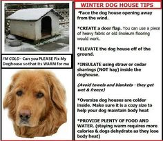 Dog house for winter - tips for feral cat / dog shelters
