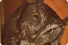 Owl in Utah