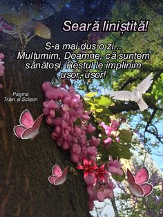 Spiritual Quotes, Spirituality, Messages, Romania, Pictures, Spirit Quotes, Spirituality Quotes, Spiritual