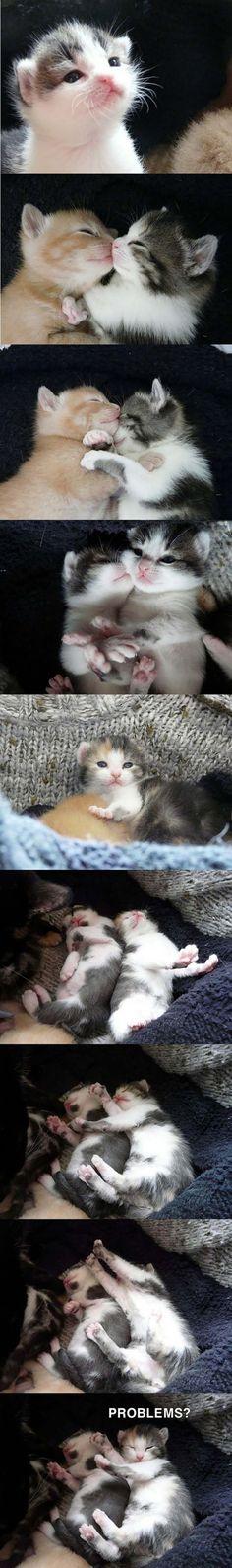 Orange and calico kittens