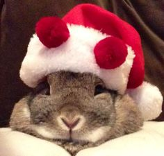 The Daily Bunny's Christmas 2013 Mega-Post 4