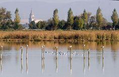 El 40 por ciento de las aves acuáticas que invernan en el Mediterráneo occidental viven en humedales españoles | SoyRural.es