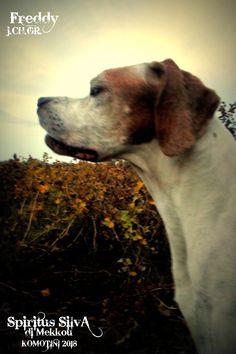 Spiritus, Georgia, Dogs, Animals, Animales, Animaux, Animal Memes, Animal, Pet Dogs