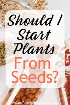 Looking to start a vegetable garden? Learn if it's worth it to start your plants from seeds or use established plants in your homestead garden.