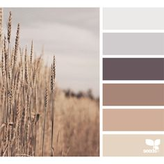 design seeds | for all who ♥ color ❤ liked on Polyvore featuring color, backgrounds, design seeds and color palette