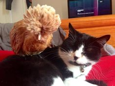 Super furry friendships: readers' photos of their pets making pals