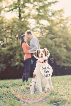 Porque nuestras mascotas también son parte de la familia y nos ayudan en nuestros planes