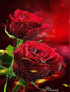 Beautiful Flowers Wallpapers, Beautiful Rose Flowers, Love Flowers, My Flower, Flower Power, Cute Wallpaper Backgrounds, Flower Wallpaper, Free Animated Gifs, Every Rose