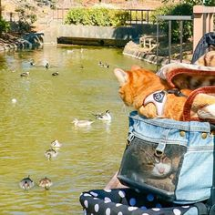 Cats Fuku-Chan and Daikichi find fame travelling around the world - Ego - AlterEgo Travel Around The World, Around The Worlds, Diversity, Travelling, Kitty, Japan, Cats, Inspiration, Beauty