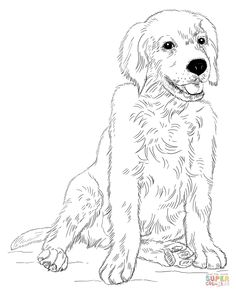 Printable Golden Retriever Coloring Page. Free PDF ...