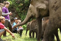 Elephant Nature Park - This is an elephant sanctuary in Chiang Mai, Thailand where the elephants are treated with kindness and people can stay overnight and volunteer with the elephants!