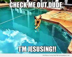 funny animal pool - Recherche Google