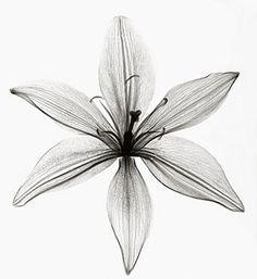 תוצאת תמונה עבור roentgen flower black and white