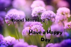A collection of Beautiful Good Morning Images, beautiful good morning pictures, whatsapp good morning images and quotes. Sweet Good Morning Images, Morning Images In Hindi, Good Morning Picture, Morning Pictures, Good Morning Quotes, Have A Happy Day, Beautiful Photos Of Nature, Friends Image, Happy Birthday Images