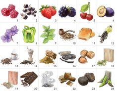 Red Wine Aroma Kit - 24 aromas. Awaken your sense of smell and your wine tasting skills with this aroma recognition training tool praised by sommeliers. List of aromas: 1.raspberry, 2.blackcurrant, 3.strawberry, 4.blackberry, 5.cherry, 6.plum, 7.violet, 8.capsicum, 9.mint, 10.tobacco, 11.toast, 12.vanilla, 13.coffee, 14.pepper, 15.cinnamon, 16.liquorice, 17.hazelnut, 18.oak, 19.cedar, 20.chocolate, 21.smoke, 22.leather, 23.truffle, 24.tree moss