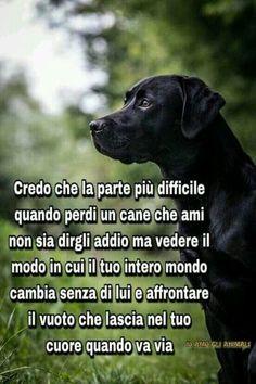 Frasi amore per i cani 5
