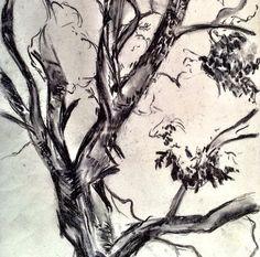 Charcoal study. Tree sketch - Nicky Heard. Tree Sketches, Art Work, Charcoal, Trees, Study, Artwork, Work Of Art, Studio, Tree Structure