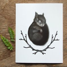 Sleeping Baby Squirrel Print