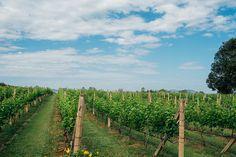 PB Valley Khao Yai Winery, Nakhon Ratchasima province Bangkok Trip, Bangkok Travel, Thailand Tourism, Vineyard, Awards, Places To Visit, Outdoor, Outdoors, Vine Yard