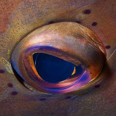 fisheye by tomeyer, via Flickr