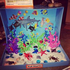 Carson's Bull Shark ocean diorama!! We had so much fun making this!!!