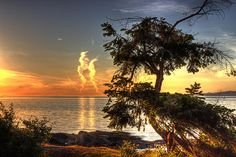 Madrona Sunset by Randy Hall #photograph #Canada