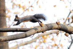 Korean squirrel   Flickr - Photo Sharing! everland.korea