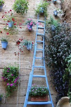 #Garden #flowers #spain #tourism #travel #cordoba #patios #diy