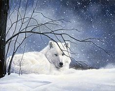 White Wolf : North American Wildlife Paintings by Lucie Bilodeau (Photos - Video) Wildlife Paintings, Wildlife Art, Animal Paintings, Wolf Hybrid, Tres Belle Photo, Arctic Wolf, Wolf Painting, 1 Gif, Thing 1