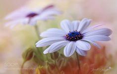 flower by kusoksveta #nature #mothernature #travel #traveling #vacation #visiting #trip #holiday #tourism #tourist #photooftheday #amazing #picoftheday