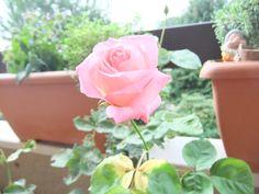On my terrace....
