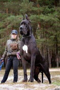 5 Dogs bigger than their owners | I want this dog so bad!!