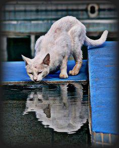 White Cat by blamstur, via Flickr