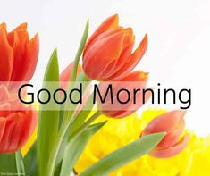 Are you searching for images for good morning handsome?Browse around this site for perfect good morning handsome ideas. These enjoyable quotes will bring you joy.