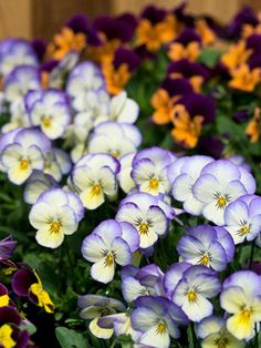 Keep your garden flourishing during winter by adding plants that flower in the cooler months.