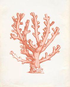 Vintage Ocean Coral Kelp Seaweed Coral Print 8x10 by OrangeTail, $14.00