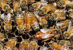 ¿Donde está la reina? (foto de las colmenas visitadas por la cátedra de Taller de Problemas Complejos, año 2012)